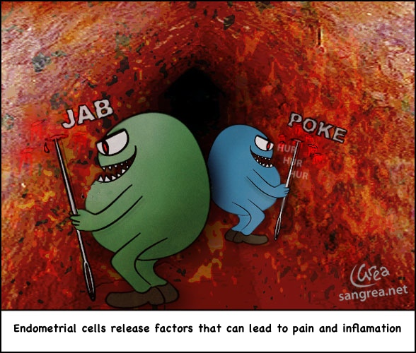 endometrial cell cartoon