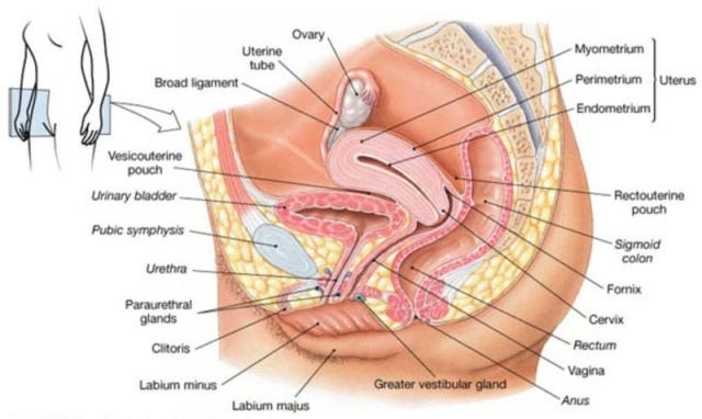 pelvic cavity