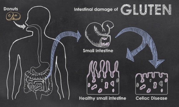 gluten cycle