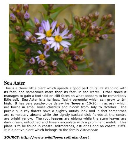 seaaster